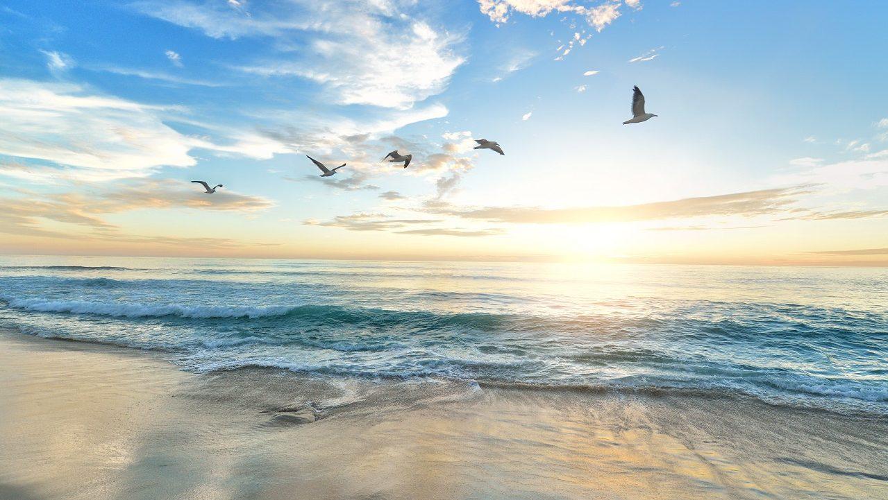Mer Oiseux Ciel