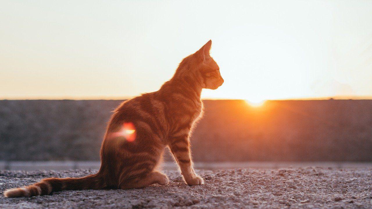 Chat plage soleil